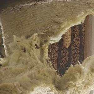 Case Study: Eastwood Pest Control & Teledyne FLIR E6-XT Thermal Imaging